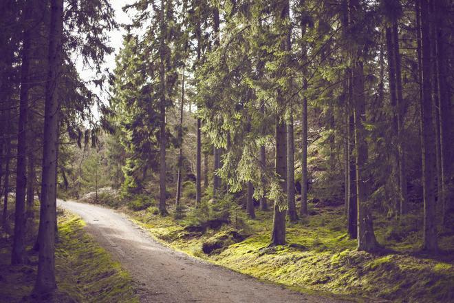 Pažintinis maršrutas: senieji Anykščių regioninio parko medžiai
