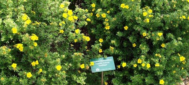 Traupio botanikos daržas